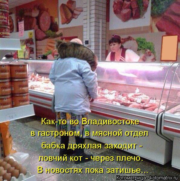 Котоматрица: Как-то во Владивостоке в гастроном, в мясной отдел бабка дряхлая заходит - В новостях пока затишье... ловчий кот - через плечо.