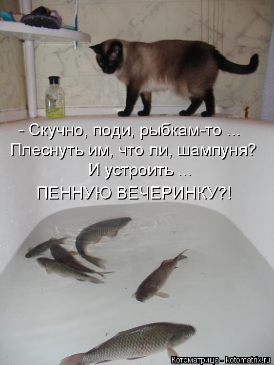 Котоматрица: - Скучно, поди, рыбкам-то ... Плеснуть им, что ли, шампуня? И устроить ... ПЕННУЮ ВЕЧЕРИНКУ?!