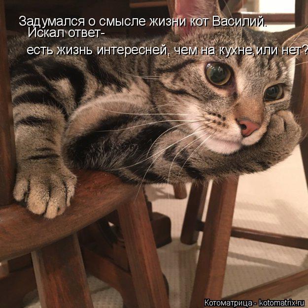 Котоматрица: Задумался о смысле жизни кот Василий. Искал ответ- есть жизнь интересней, чем на кухне,или нет?