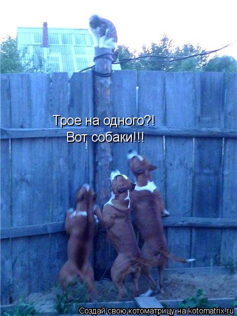 Котоматрица: Вот собаки!!! Трое на одного?!