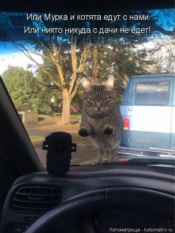 Котоматрица: Или Мурка и котята едут с нами. Или никто никуда с дачи не едет!