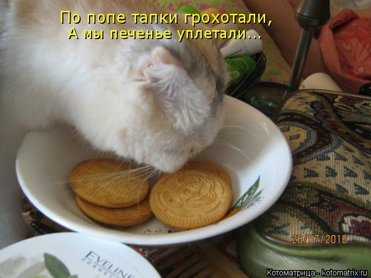 Котоматрица: По попе тапки грохотали, А мы печенье уплетали...