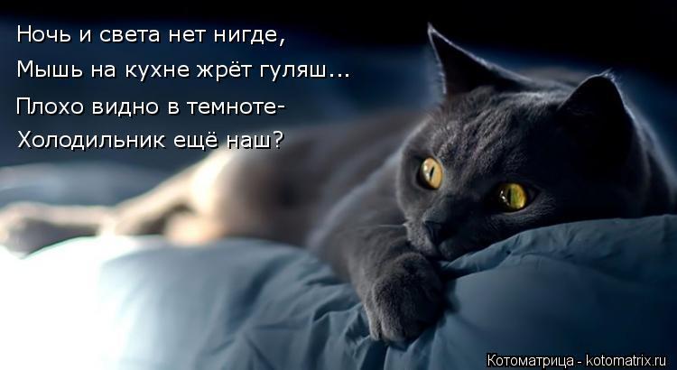 Котоматрица: Ночь и света нет нигде,  Мышь на кухне жрёт гуляш... Плохо видно в темноте- Холодильник ещё наш?