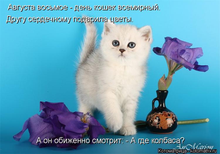 Котоматрица: А он обиженно смотрит: - А где колбаса? Августа восьмое - день кошек всемирный. Другу сердечному подарила цветы.