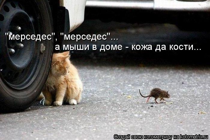 """Котоматрица: """"мерседес"""", """"мерседес""""... а мыши в доме - кожа да кости..."""