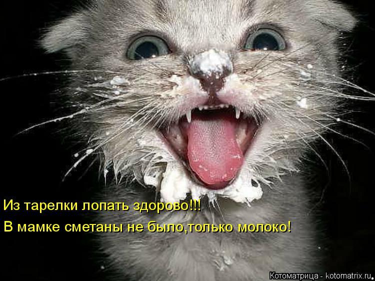 Котоматрица: Из тарелки лопать здорово!!! В мамке сметаны не было,только молоко!