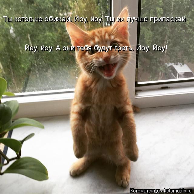 Котоматрица: Ты котов не обижай. Йоу, йоу. Ты их лучше приласкай. Йоу, йоу. А они тебя будут греть. Йоу. Йоу!