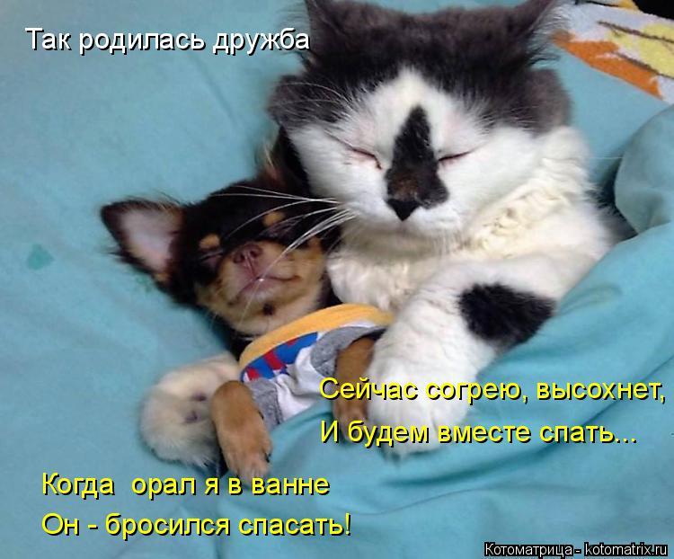 Котоматрица: Так родилась дружба Сейчас согрею, высохнет, И будем вместе спать... Когда  орал я в ванне Он - бросился спасать!