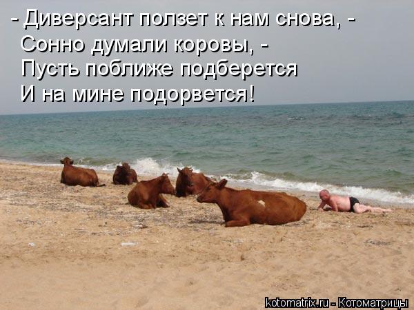 Котоматрица: - Диверсант ползет к нам снова, - Сонно думали коровы, - Пусть поближе подберется И на мине подорвется!
