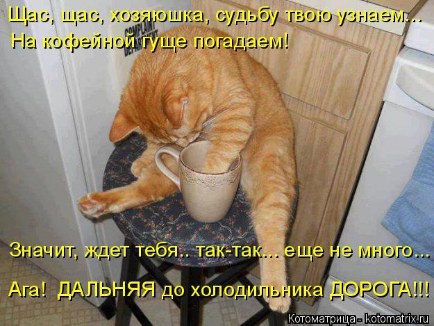 Котоматрица: Щас, щас, хозяюшка, судьбу твою узнаем... На кофейной гуще погадаем! Значит, ждет тебя.. так-так... еще не много... Ага!  ДАЛЬНЯЯ до холодильника Д