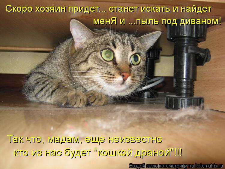 """Котоматрица: Скоро хозяин придет... станет искать и найдет менЯ и ...пыль под диваном! Так что, мадам, еще неизвестно кто из нас будет """"кошкой драной""""!!!"""