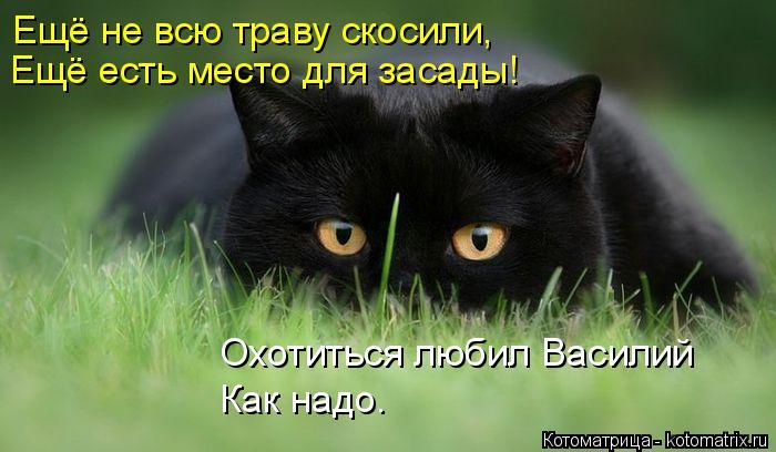 Котоматрица: Ещё не всю траву скосили, Ещё есть место для засады! Охотиться любил Василий Как надо.