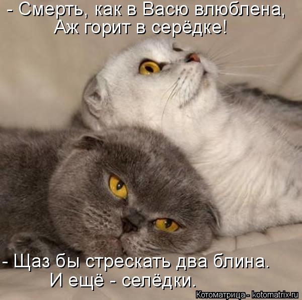 Котоматрица: - Смерть, как в Васю влюблена, Аж горит в серёдке! - Щаз бы стрескать два блина. И ещё - селёдки.