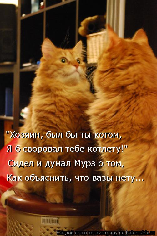 """Котоматрица: """"Хозяин, был бы ты котом, Сидел и думал Мурз о том, Как объяснить, что вазы нету... Я б своровал тебе котлету!"""""""