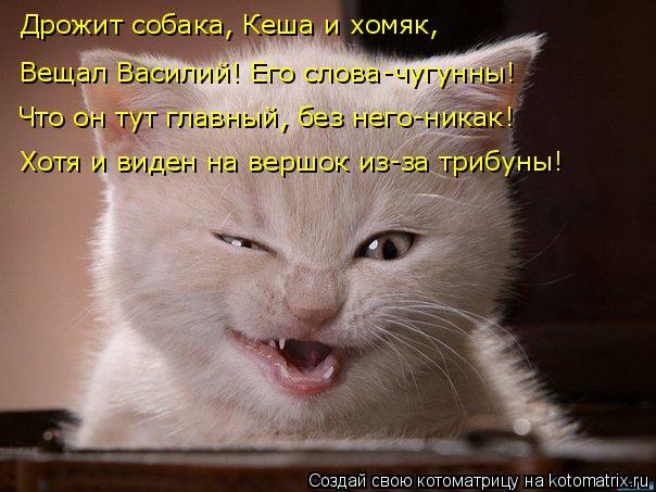 Котоматрица: Дрожит собака, Кеша и хомяк, Вещал Василий! Его слова-чугунны! Что он тут главный, без него-никак! Хотя и виден на вершок из-за трибуны!
