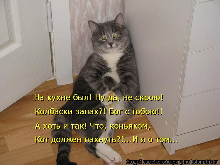 Котоматрица: На кухне был! Ну да, не скрою! Колбаски запах?! Бог с тобою!! А хоть и так! Что, коньяком, Кот должен пахнуть?!...И я о том...