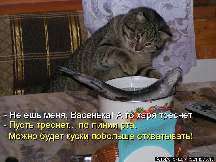 Котоматрица: - Не ешь меня, Васенька! А то харя треснет! - Пусть треснет... по линии рта.  Можно будет куски побольше отхватывать!