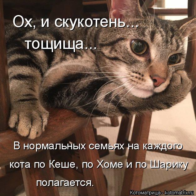 Котоматрица: тощища... Ох, и скукотень... В нормальных семьях на каждого  кота по Кеше, по Хоме и по Шарику полагается.