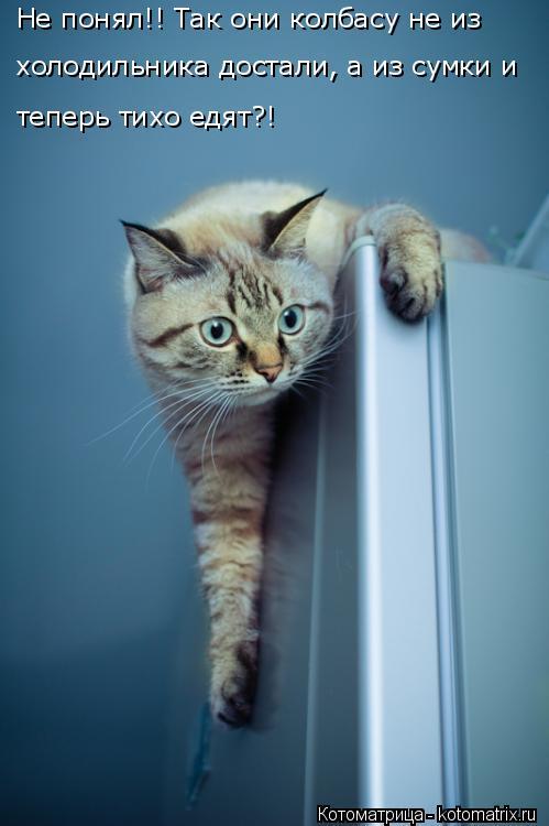 Котоматрица: Не понял!! Так они колбасу не из  холодильника достали, а из сумки и  теперь тихо едят?!
