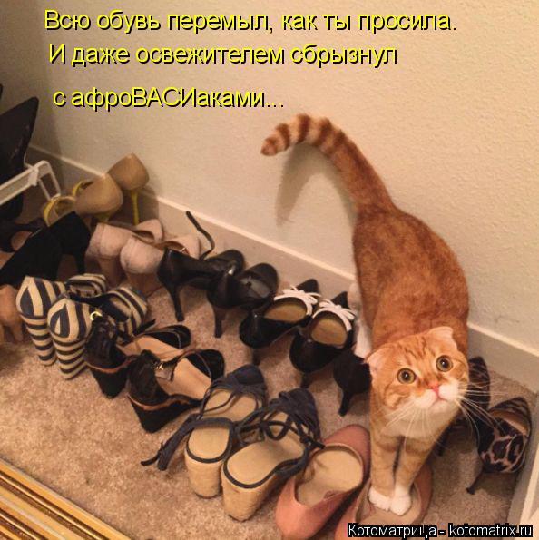 Котоматрица: Всю обувь перемыл, как ты просила. И даже освежителем сбрызнул с афроВАСИаками...