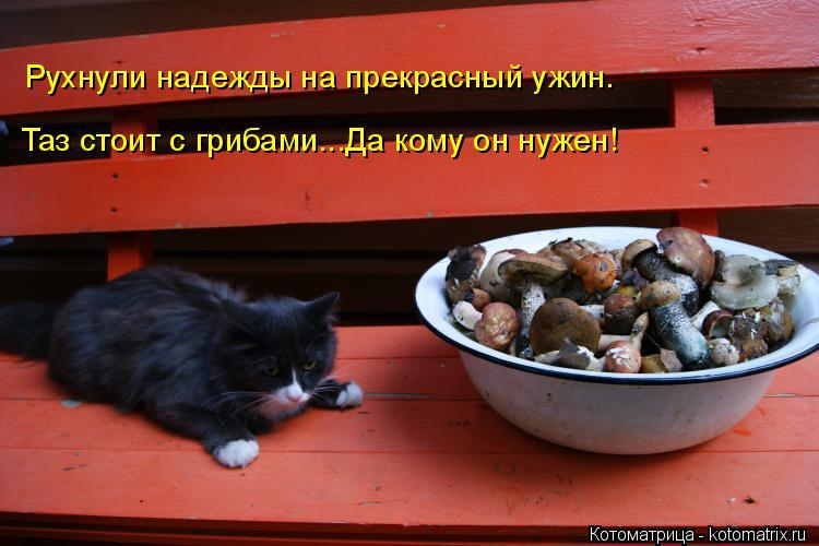 Котоматрица: Рухнули надежды на прекрасный ужин. Таз стоит с грибами...Да кому он нужен!