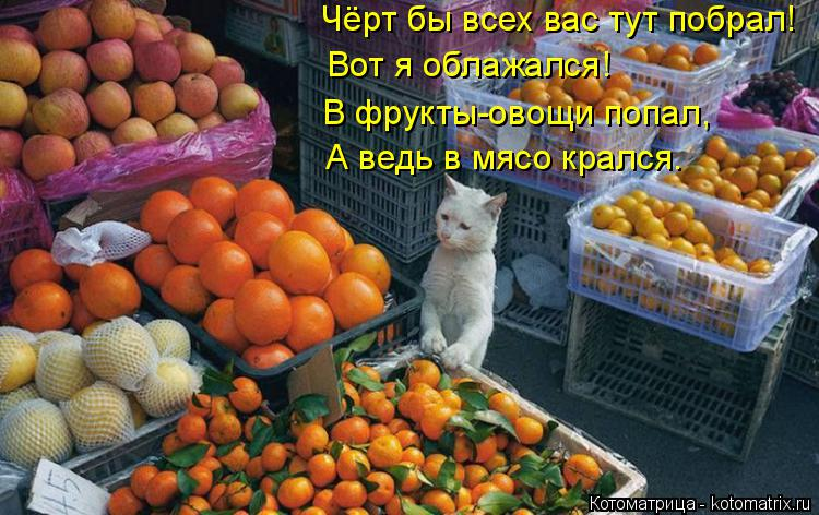 Котоматрица: Чёрт бы всех вас тут побрал! Вот я облажался! В фрукты-овощи попал, А ведь в мясо крался.