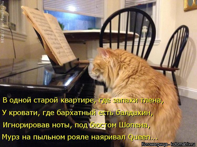 Котоматрица: Мурз на пыльном рояле наяривал Queen... Игнорировав ноты, под бюстом Шопена, У кровати, где бархатный есть балдахин, В одной старой квартире, гд