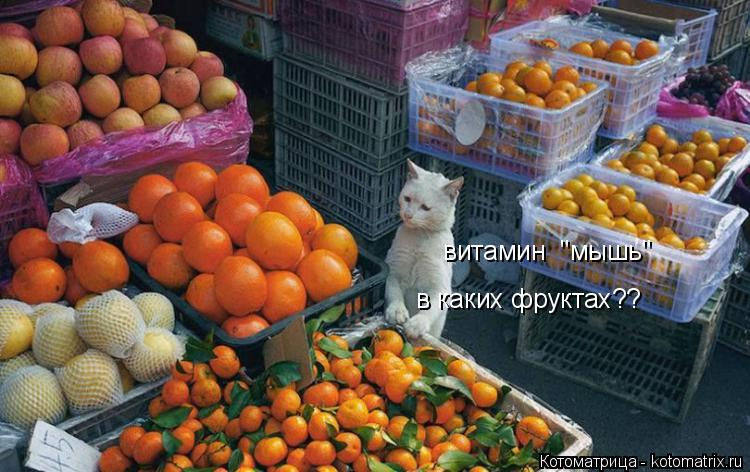 """Котоматрица: витамин  """"мышь""""  в каких фруктах??"""