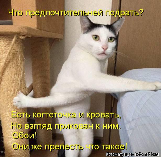 Котоматрица: Что предпочтительней подрать? Есть когтеточка и кровать, Но взгляд прикован к ним. Обои! Они же прелесть что такое!