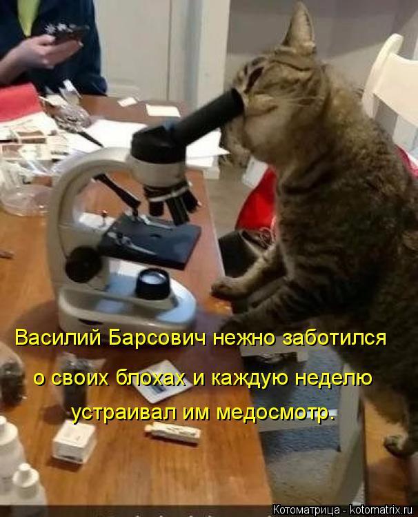 Котоматрица: Василий Барсович нежно заботился о своих блохах и каждую неделю устраивал им медосмотр.