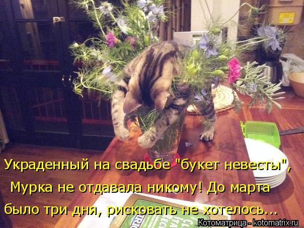 """Котоматрица: Украденный на свадьбе """"букет невесты"""",  Мурка не отдавала никому! До марта  было три дня, рисковать не хотелось..."""