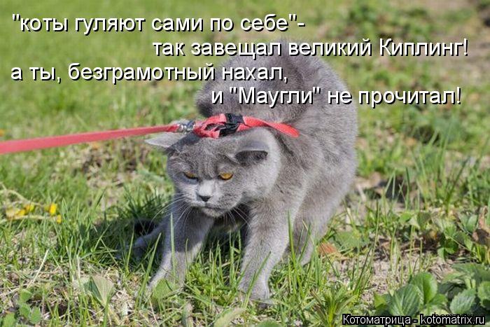"""Котоматрица: """"коты гуляют сами по себе""""- так завещал великий Киплинг! а ты, безграмотный нахал, и """"Маугли"""" не прочитал!"""