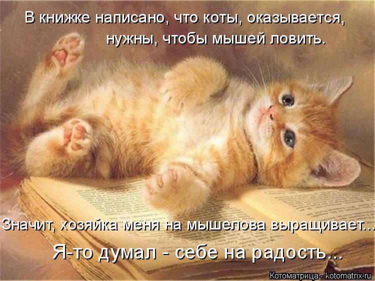 Котоматрица: Значит, хозяйка меня на мышелова выращивает... Я-то думал - себе на радость... В книжке написано, что коты, оказывается,  нужны, чтобы мышей лови