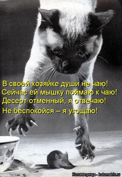 Котоматрица: В своей хозяйке души не чаю! Сейчас ей мышку поймаю к чаю! Десерт отменный, я отвечаю! Не беспокойся – я угощаю!