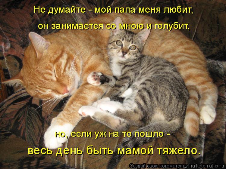 Котоматрица: Не думайте - мой папа меня любит,  он занимается со мною и голубит, но, если уж на то пошло -  весь день быть мамой тяжело.