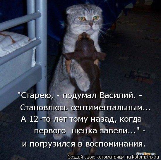 """Котоматрица: """"Старею, - подумал Василий. -  Становлюсь сентиментальным...  и погрузился в воспоминания. А 12-то лет тому назад, когда  первого  щенка завели..."""""""
