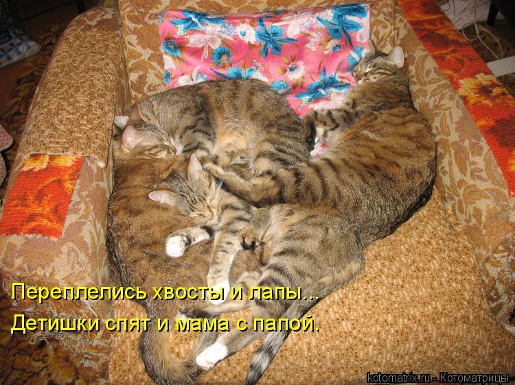 Котоматрица: Переплелись хвосты и лапы... Детишки спят и мама с папой.