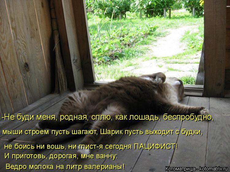 Котоматрица: -Не буди меня, родная, сплю, как лошадь, беспробудно, мыши строем пусть шагают, Шарик пусть выходит с будки, не боись ни вошь, ни глист-я сегодн