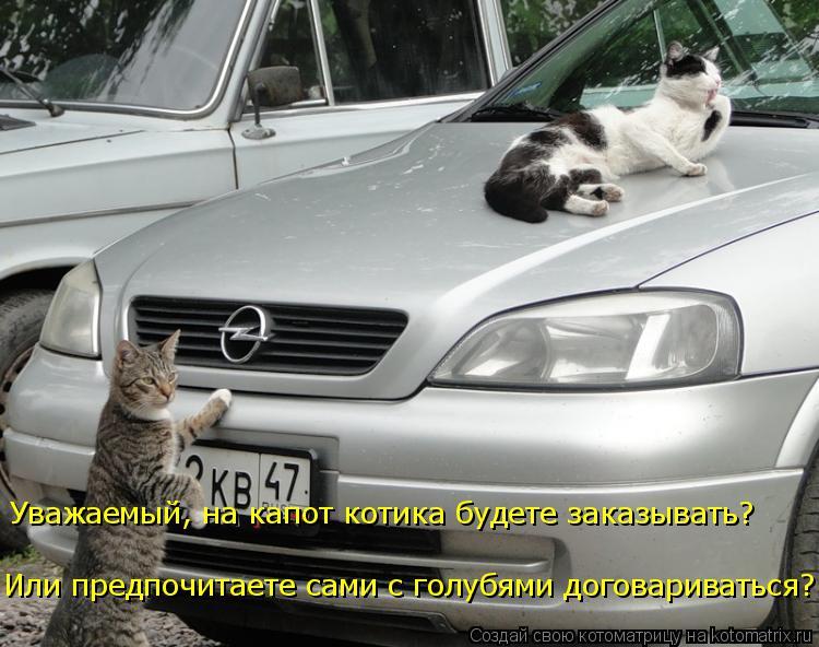 Котоматрица: Или предпочитаете сами с голубями договариваться? Уважаемый, на капот котика будете заказывать?