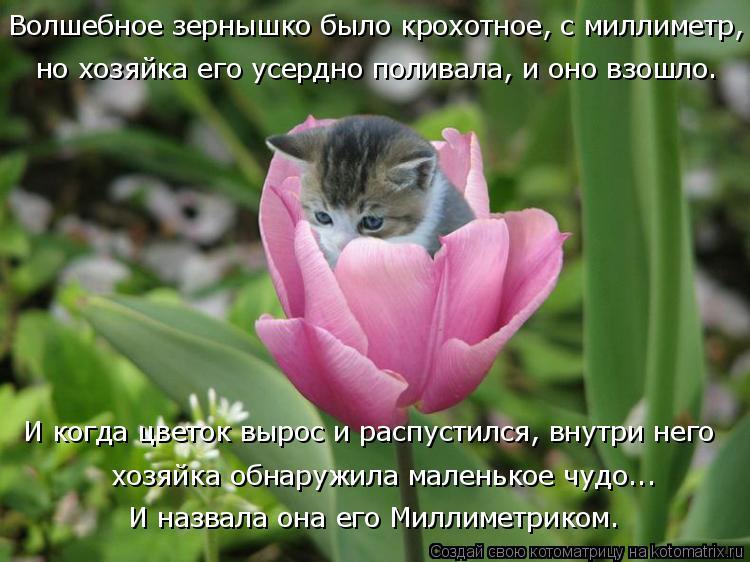 Котоматрица: Волшебное зернышко было крохотное, с миллиметр, но хозяйка его усердно поливала, и оно взошло. И когда цветок вырос и распустился, внутри не