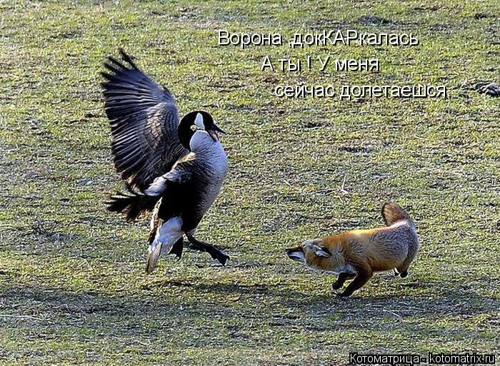 Котоматрица: Ворона ,докКАРкалась. А ты ! У меня сейчас долетаешся.