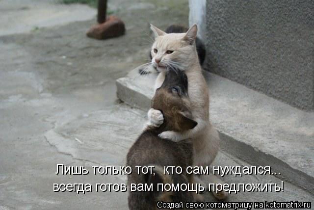 Котоматрица: Лишь только тот,  кто сам нуждался... всегда готов вам помощь предложить!