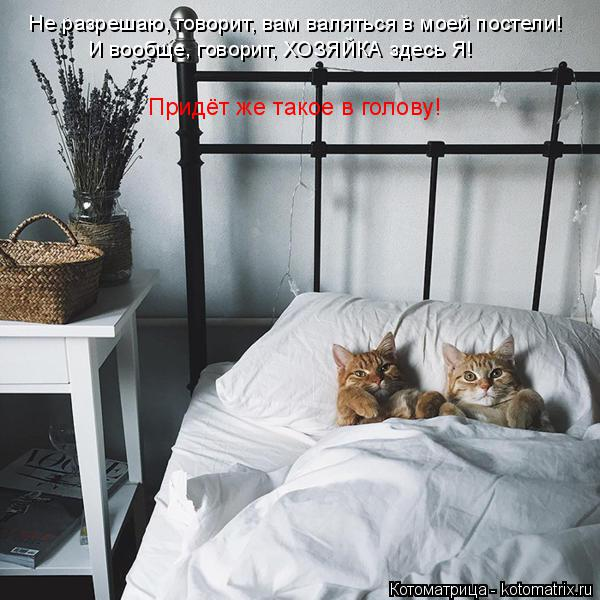 Котоматрица: Не разрешаю, говорит, вам валяться в моей постели! И вообще, говорит, ХОЗЯЙКА здесь Я! Придёт же такое в голову!