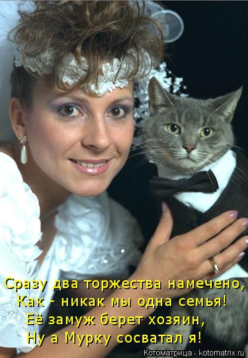 Котоматрица: Сразу два торжества намечено, Как - никак мы одна семья! Её замуж берет хозяин, Ну а Мурку сосватал я!
