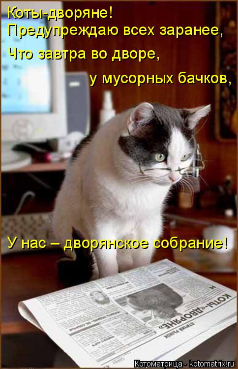 Котоматрица: Коты-дворяне!  Предупреждаю всех заранее, Что завтра во дворе,  у мусорных бачков, У нас – дворянское собрание!