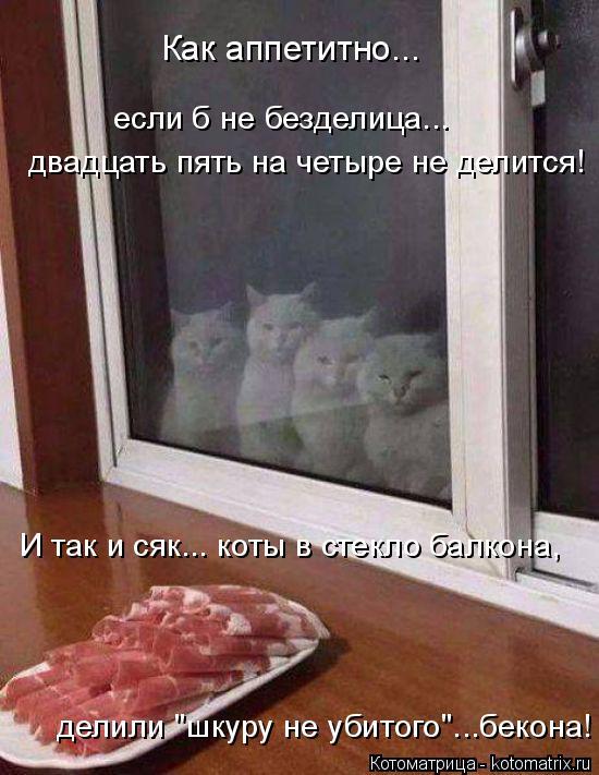"""Котоматрица: Как аппетитно...  если б не безделица...  двадцать пять на четыре не делится!  И так и сяк... коты в стекло балкона, делили """"шкуру не убитого""""...бек"""