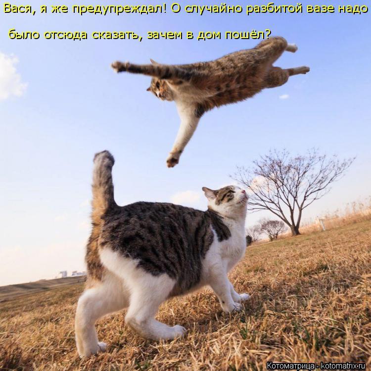 Котоматрица: Вася, я же предупреждал! О случайно разбитой вазе надо  было отсюда сказать, зачем в дом пошёл?