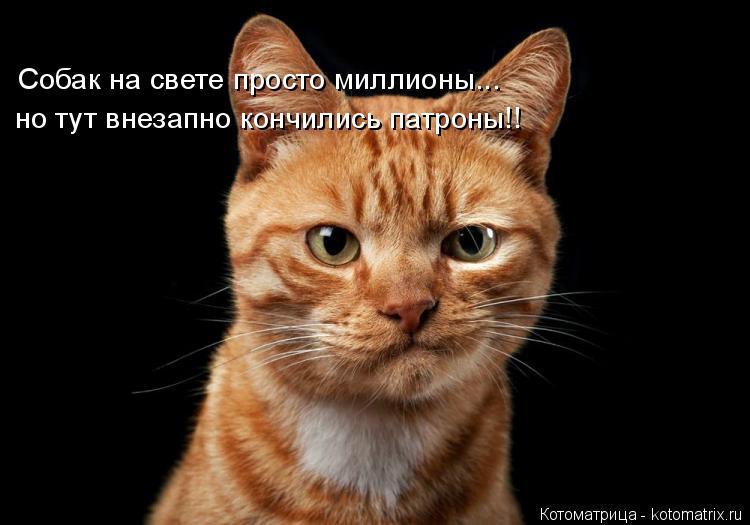 Котоматрица: Собак на свете просто миллионы... но тут внезапно кончились патроны!!