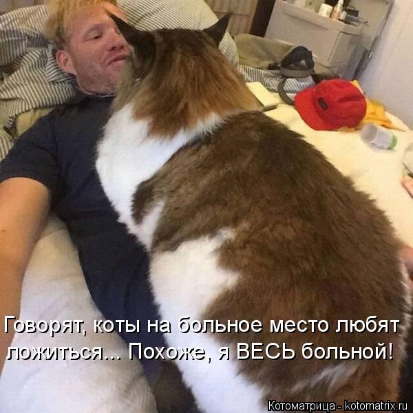 Котоматрица: Говорят, коты на больное место любят ложиться... Похоже, я ВЕСЬ больной!