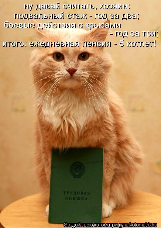 Котоматрица: ну давай считать, хозяин: подвальный стаж - год за два; боевые действия с крысами  - год за три; итого: ежедневная пенсия - 5 котлет!